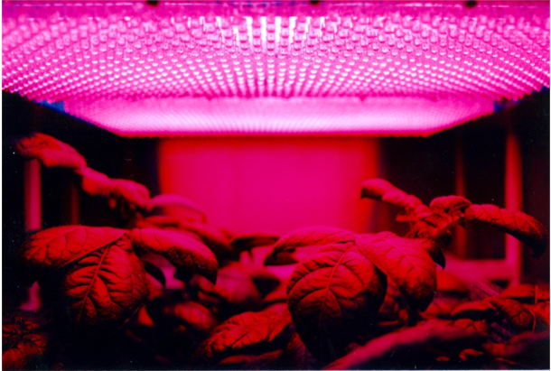 LED indoor growing