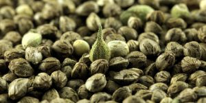 Hemp industry analysis