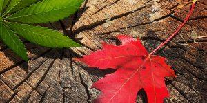 Canada Cannabis Ontario
