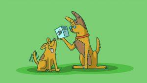 CBD puppies