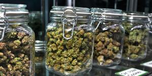 Medical Marijuana Bud Shop